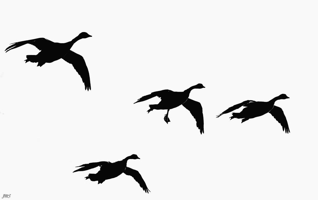 1024x644 Flying Goose Clip Art