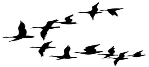 475x215 Goose Clipart V Formation 3573675