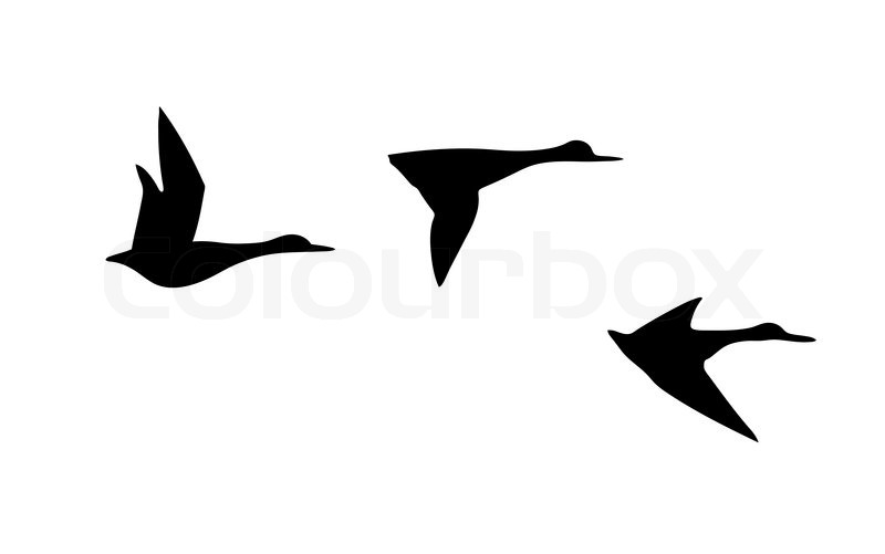 800x501 Shining Inspiration Flying Duck Silhouette
