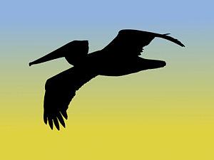 300x225 Pelican Drawings