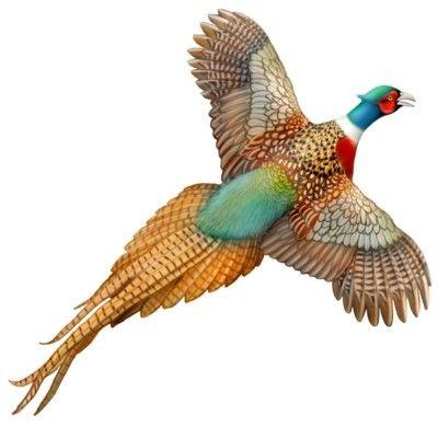 400x400 Flying Pheasant Tattoo