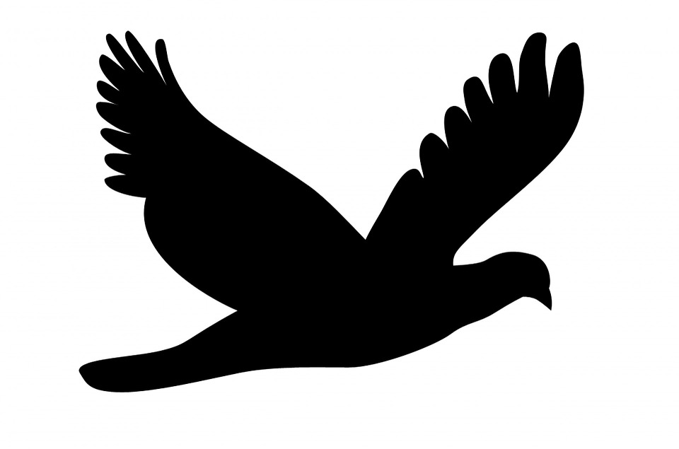 960x635 Free Photo Feathers Flying Bird Flying Wings Stylized