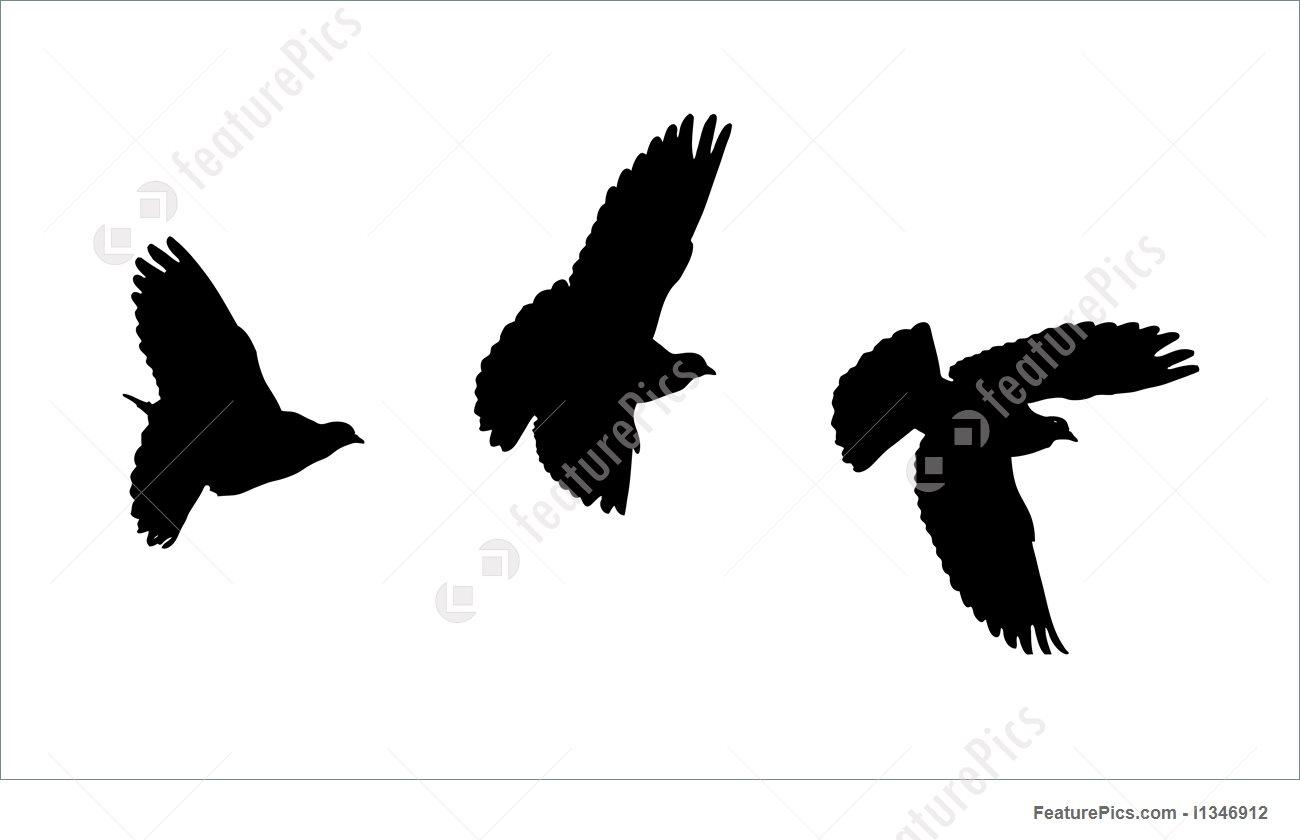 1300x840 Bird Silhouettes Illustration