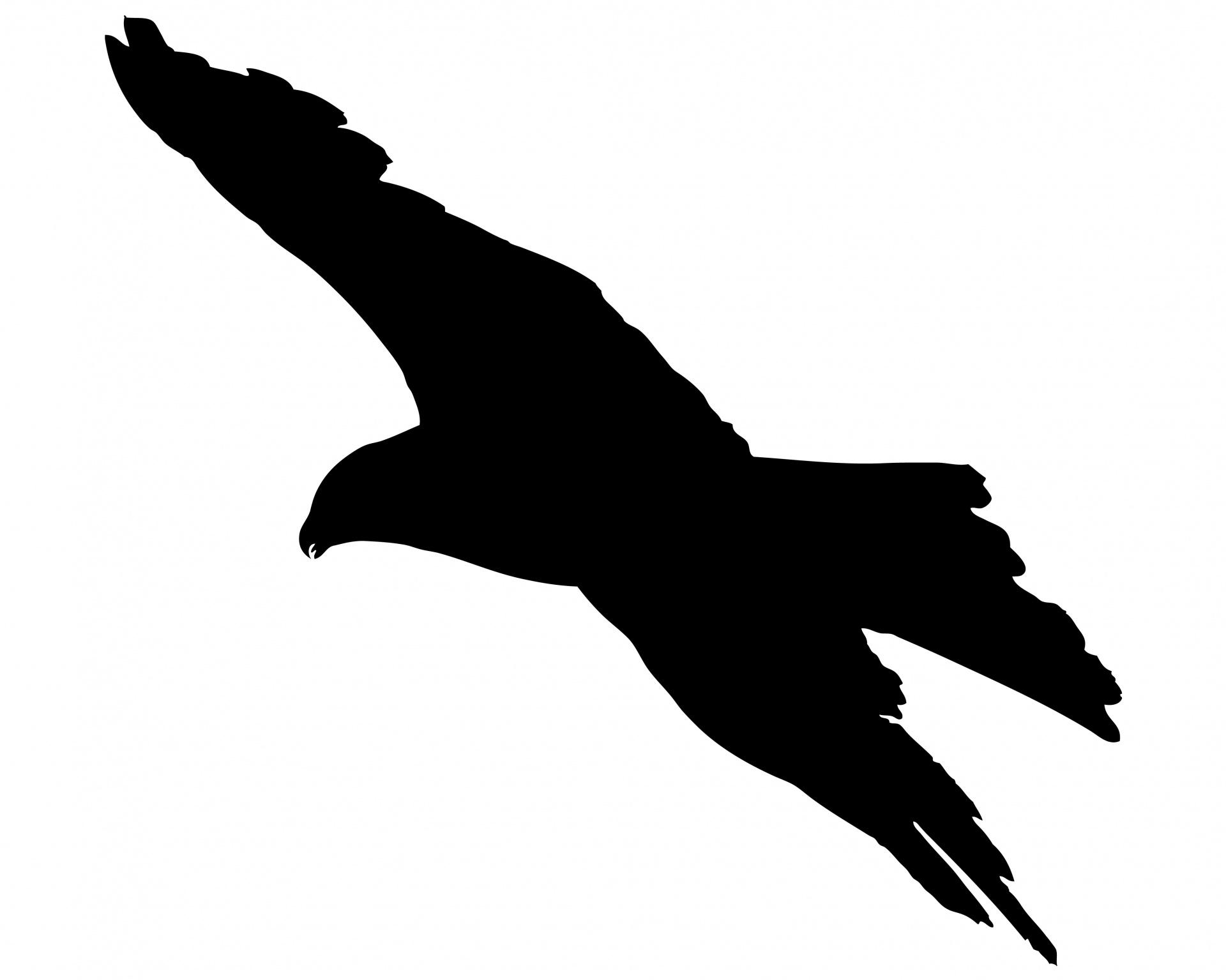 1920x1535 Bird Flying Silhouette Free Stock Photo