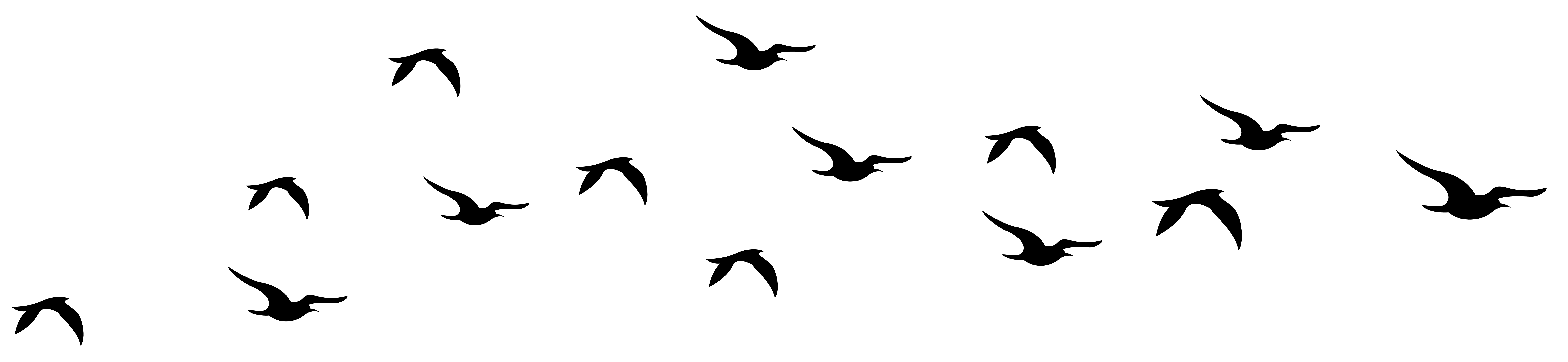7919x1829 Bird Silhouette Flying Transparent Png