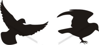 320x145 Flying Sparrow Silhouette