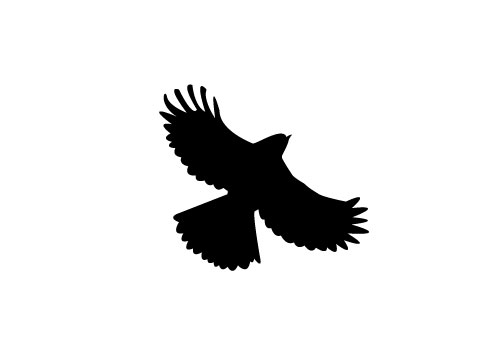 500x350 Free Flying Bird Silhouette Vector