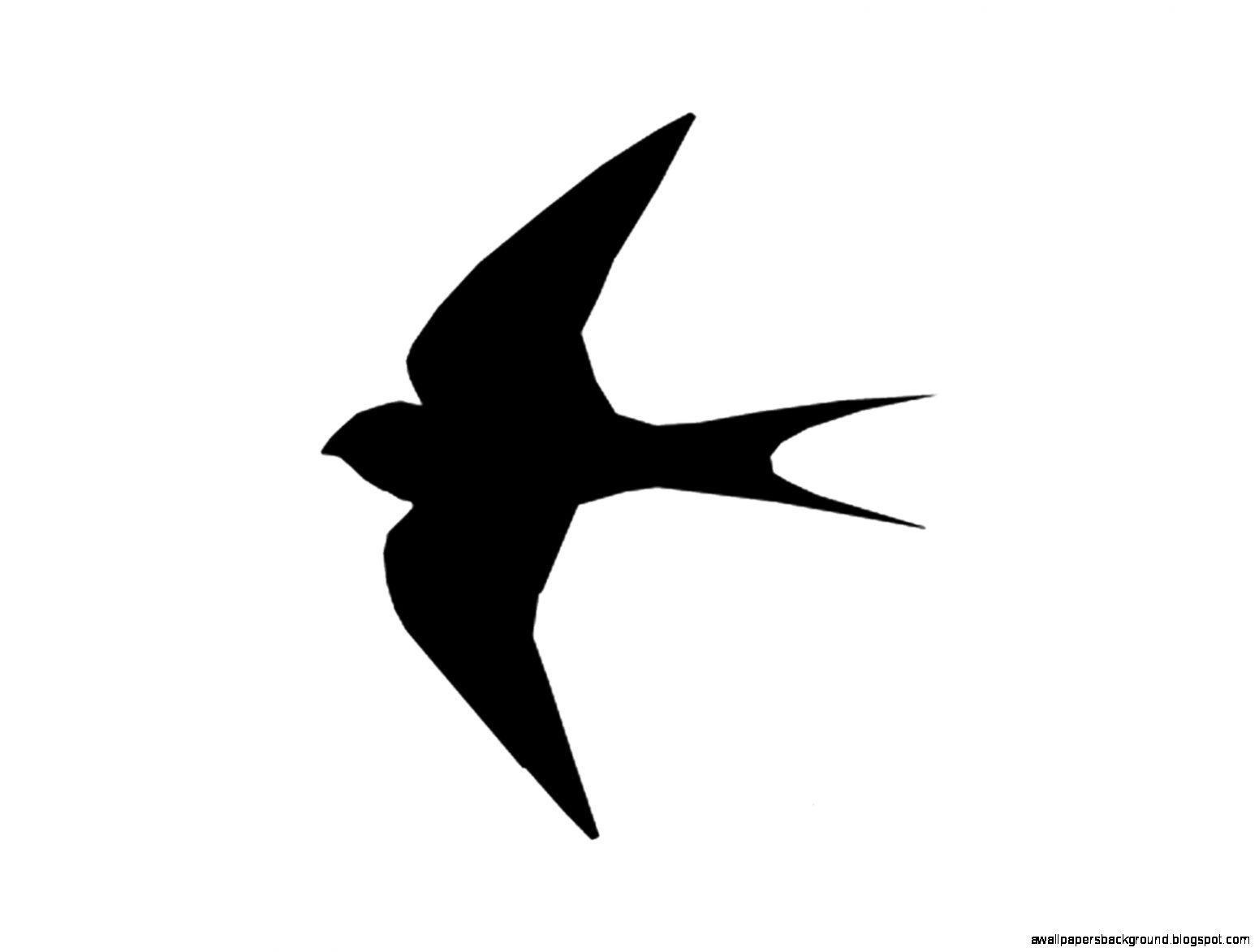 1551x1173 Single Flying Bird Silhouette Wallpapers Background
