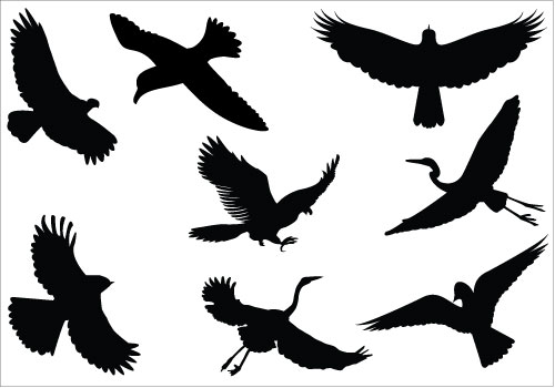 500x350 Sparrow Silhouette Clipart