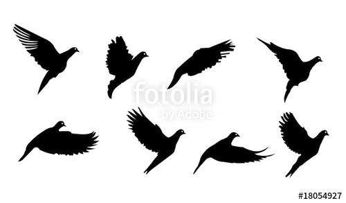 500x293 Flying Bird Vector Silhouettes Illustration Stock Image