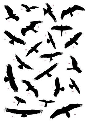283x400 Lobojo's Den You Can'T Fly Over A Turkey Farm