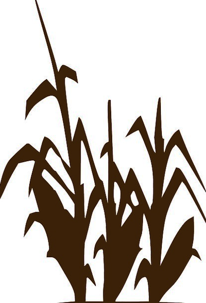 415x609 Corn, Goo, Drink, Food, Crop, Maize, Silhouette, Agriculture