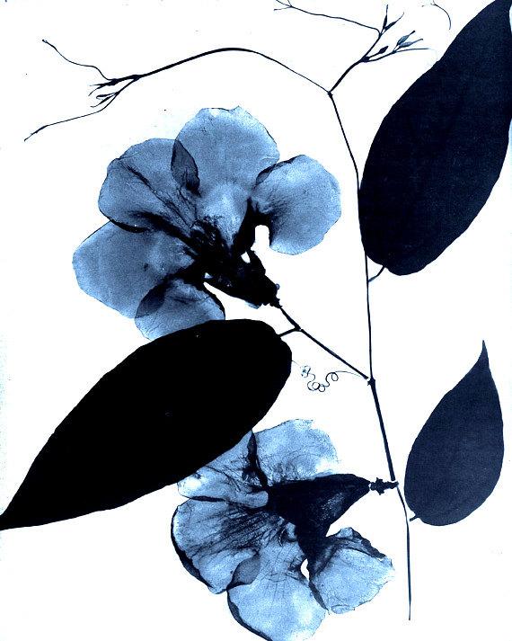 570x713 Antique Botanical Print