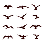 150x150 Birds Silhouettes Stork And Gull Royalty Free Vector Clip Art