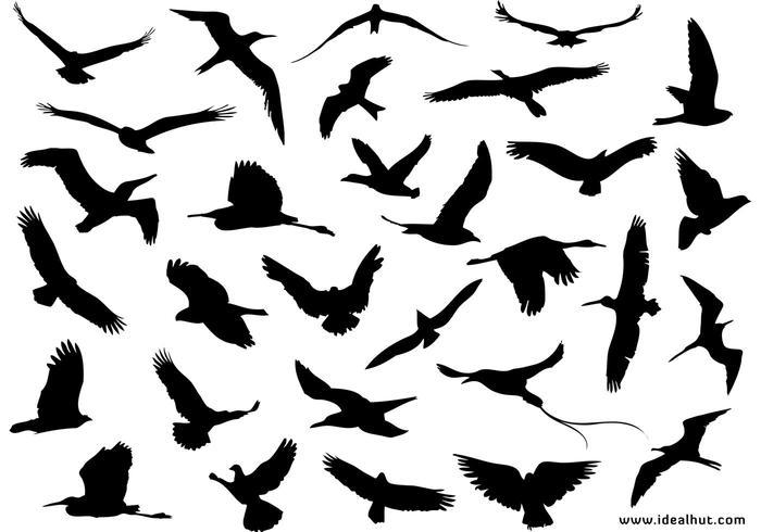 Free Bird Silhouette Vector