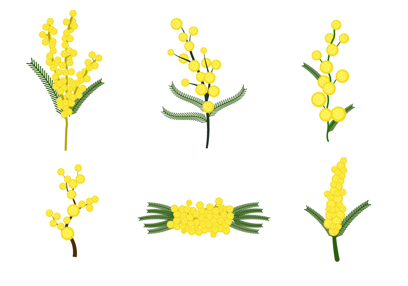 1400x980 Free Mimosa Flower Vector