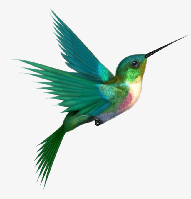 650x679 Hummingbird Png, Vectors, Psd, And Clipart For Free Download Pngtree
