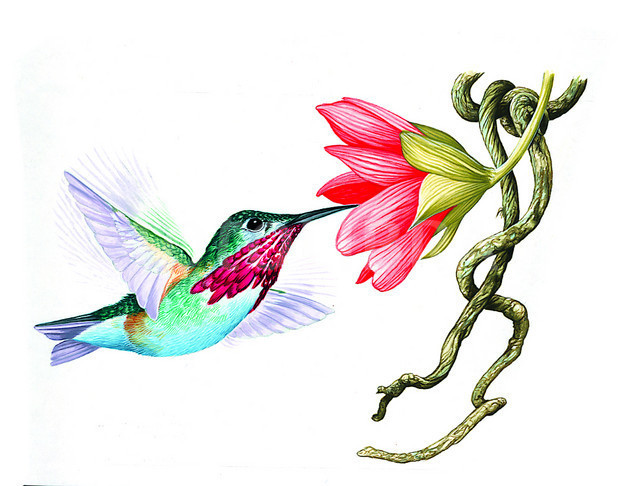 624x486 List Of Synonyms And Antonyms Of The Word Hummingbird Illustrations