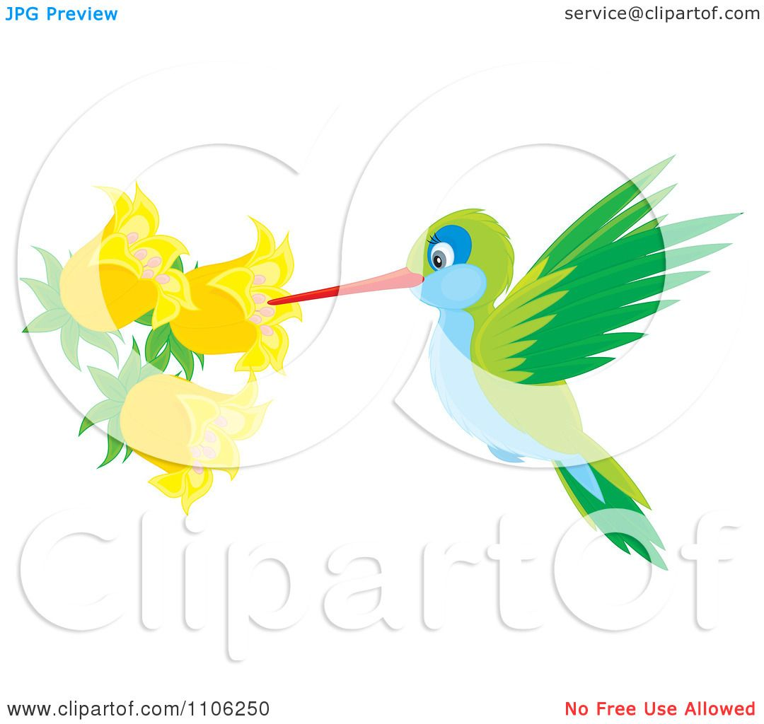 1080x1024 Clipart Green And Blue Hummingbird Sucking Nectar From Yellow Bell