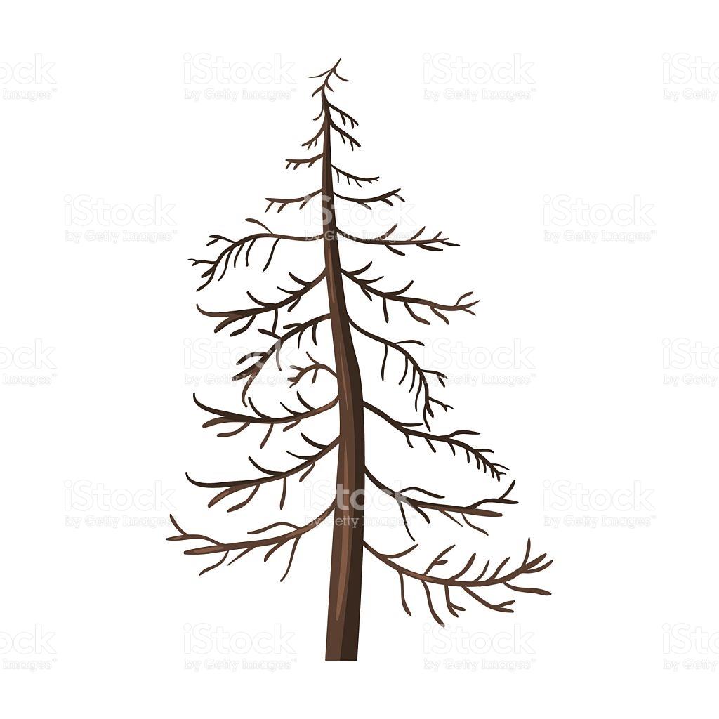 1024x1024 Dead Tree Clipart Pine Many Interesting Cliparts