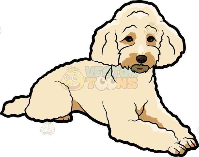 809x639 Sad Miniature Poodle Cartoon Clipart Vector Toons Free Poodles