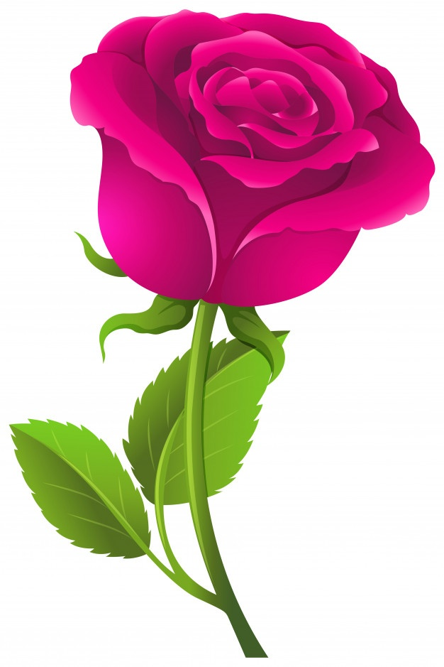 626x939 Roses Vectors, Photos And Psd Files Free Download