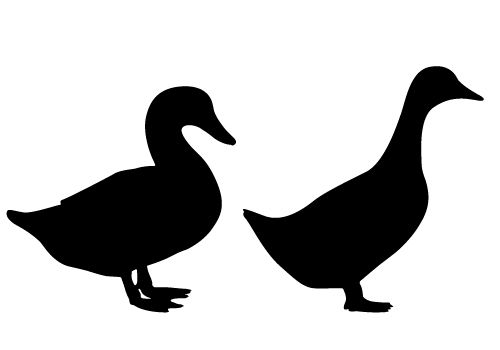 500x350 Male And Female Duck Silhouette Vector Free Download Silhouette