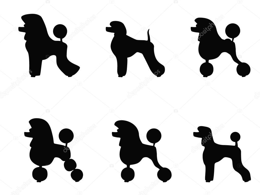 1024x768 Poodle Stock Vectors Royalty Free Illustrations Depositphotos