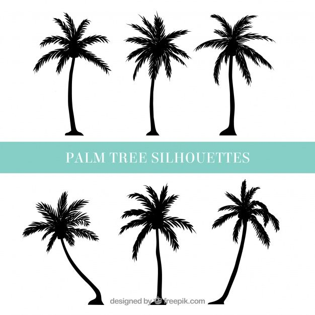 626x626 Silhouettes Of Palm Trees Free Vector Design Stencils