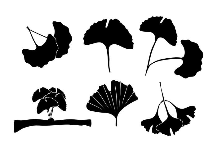 700x490 Ginkgo Vector Set