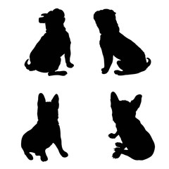 240x240 French Bulldog Purebred Dog Standing In Side View