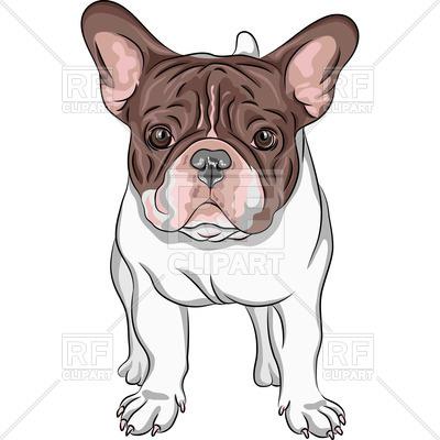 400x400 Closeup Portrait Of Dog