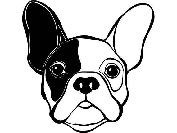 570x429 French Bulldog