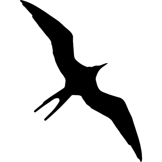 626x626 Frigatebird Bird Animal Shape Icons Free Download