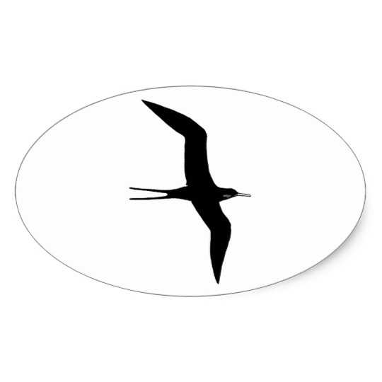 540x540 Man O' War (Magnificent Frigatebird) Oval Sticker