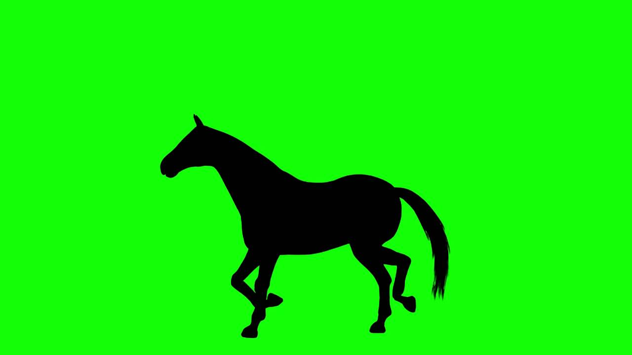 1280x720 Free Hd Video Backgrounds Horse Silhouette Galloping And Resting