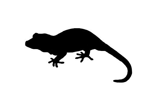 500x333 Gargoyle Gecko By Shelbyygarris Redbubble