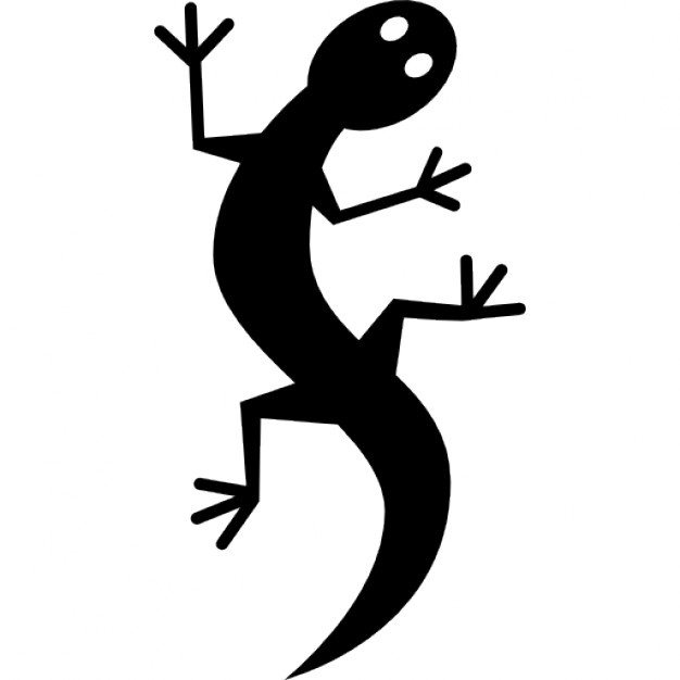 626x626 Gecko Vectors, Photos And Psd Files Free Download