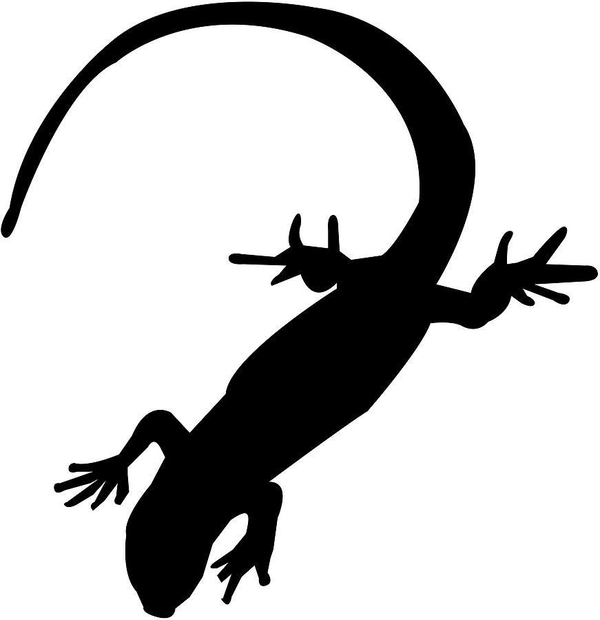 871x900 Salamander Clipart Gecko Many Interesting Cliparts