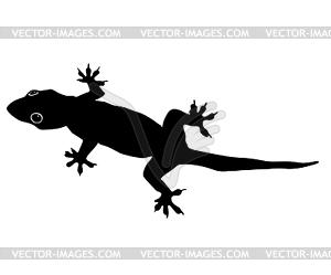 300x249 Of Gecko