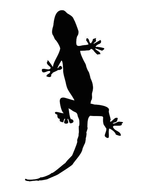 477x609 Gecko, Animal, Physical, Lizard, Image, Black, Dark, Creature