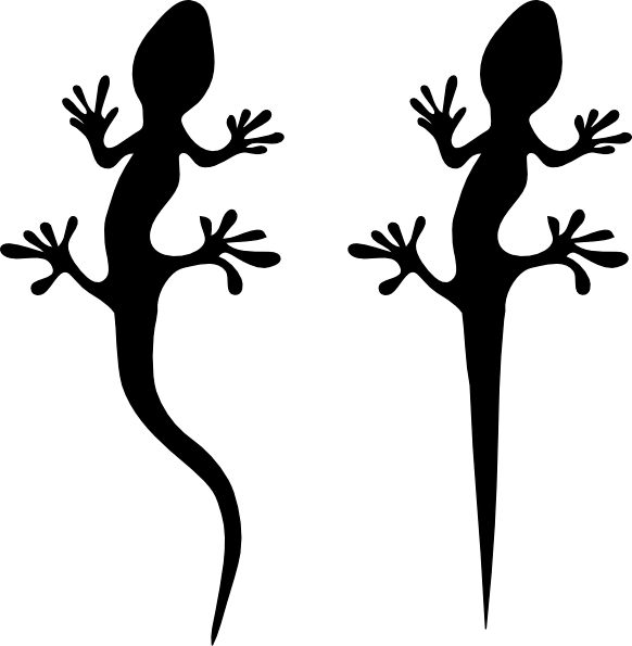 582x595 Gecko Silhouette