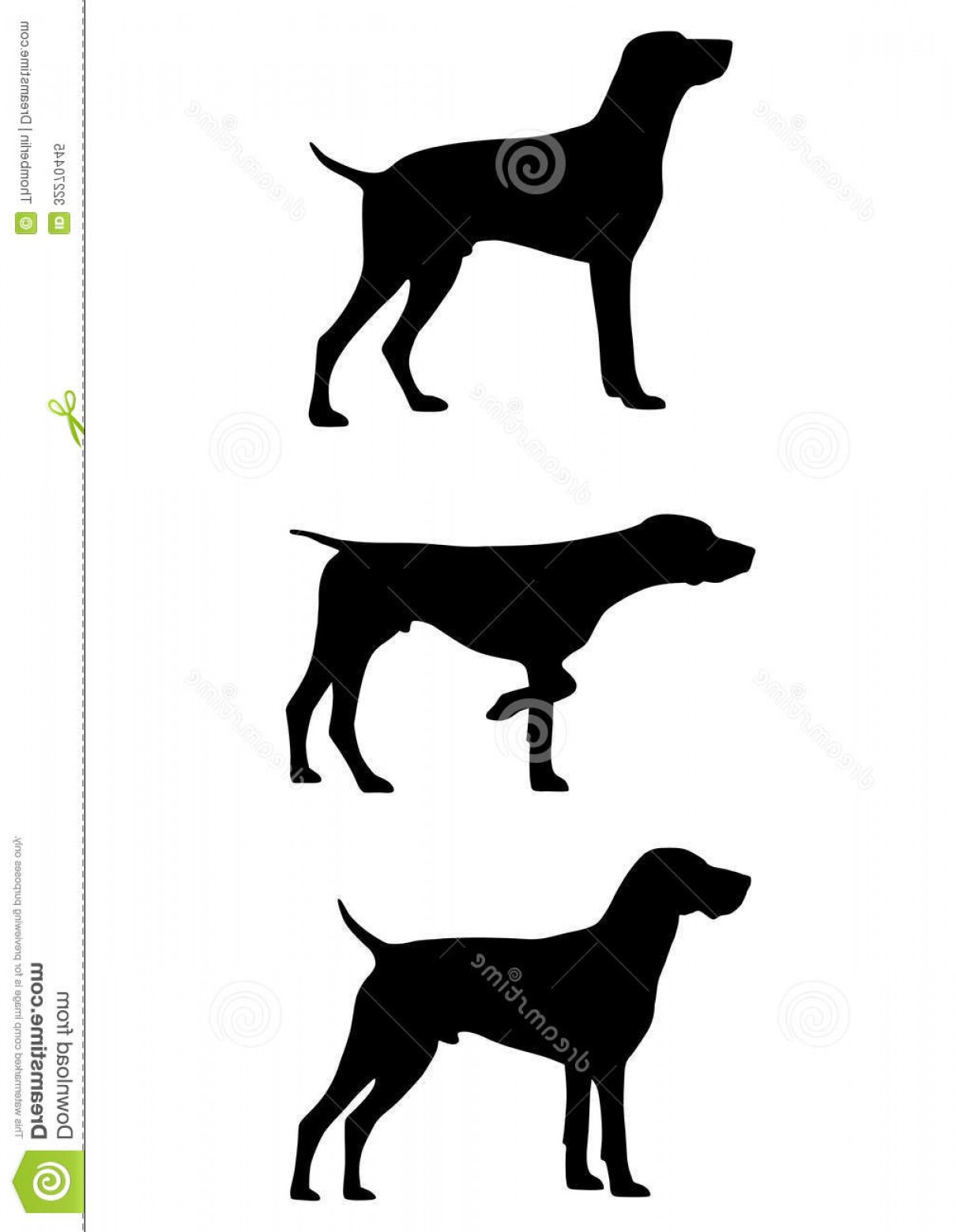 1210x1560 Royalty Free Stock Photo German Shorthaired Pointer Gsp Breed Dog