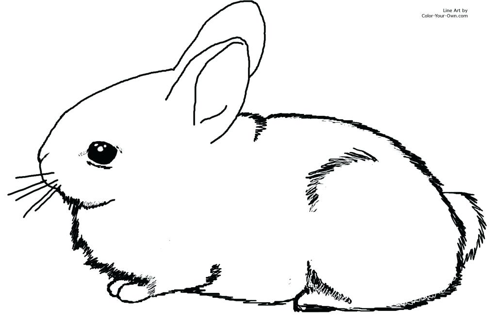 1024x668 Rabbit Coloring Pages Free Printable Rabbit Coloring Pages Free