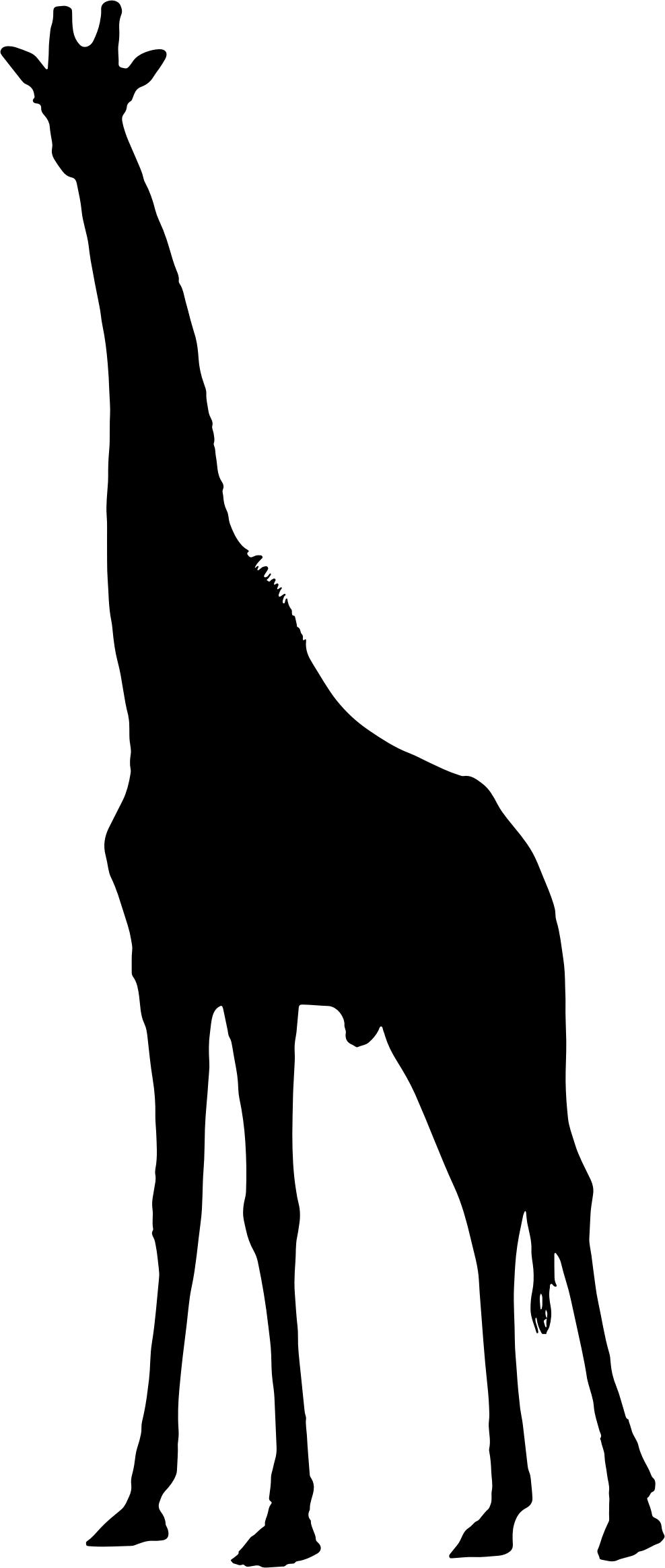 988x2326 Giraffe Silhouette 2 Icons Png