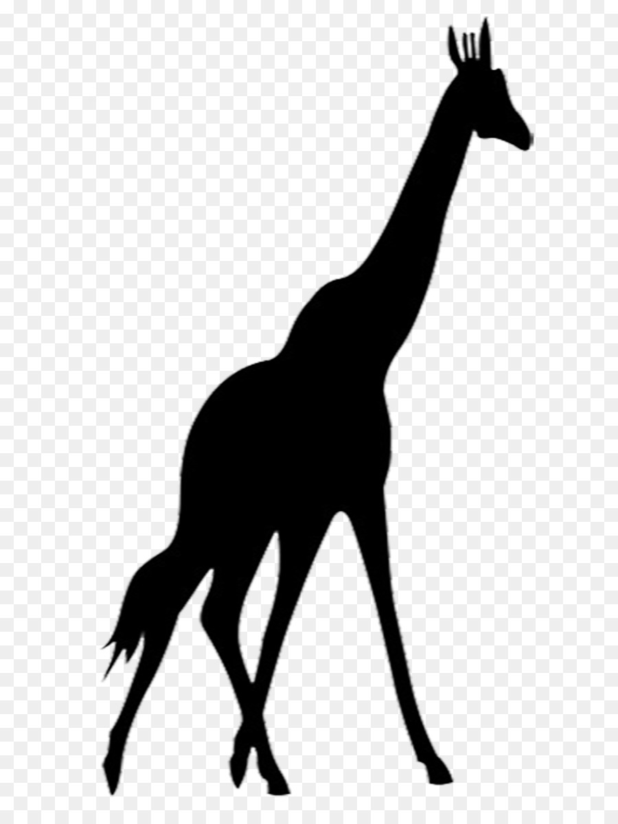 giraffe silhouette clipart at getdrawings com free for personal rh getdrawings com clipart of giraffe black and white png clipart girafe