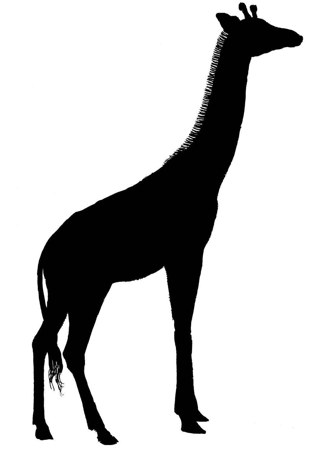 1022x1492 Giraffe Silhouette Clip Art