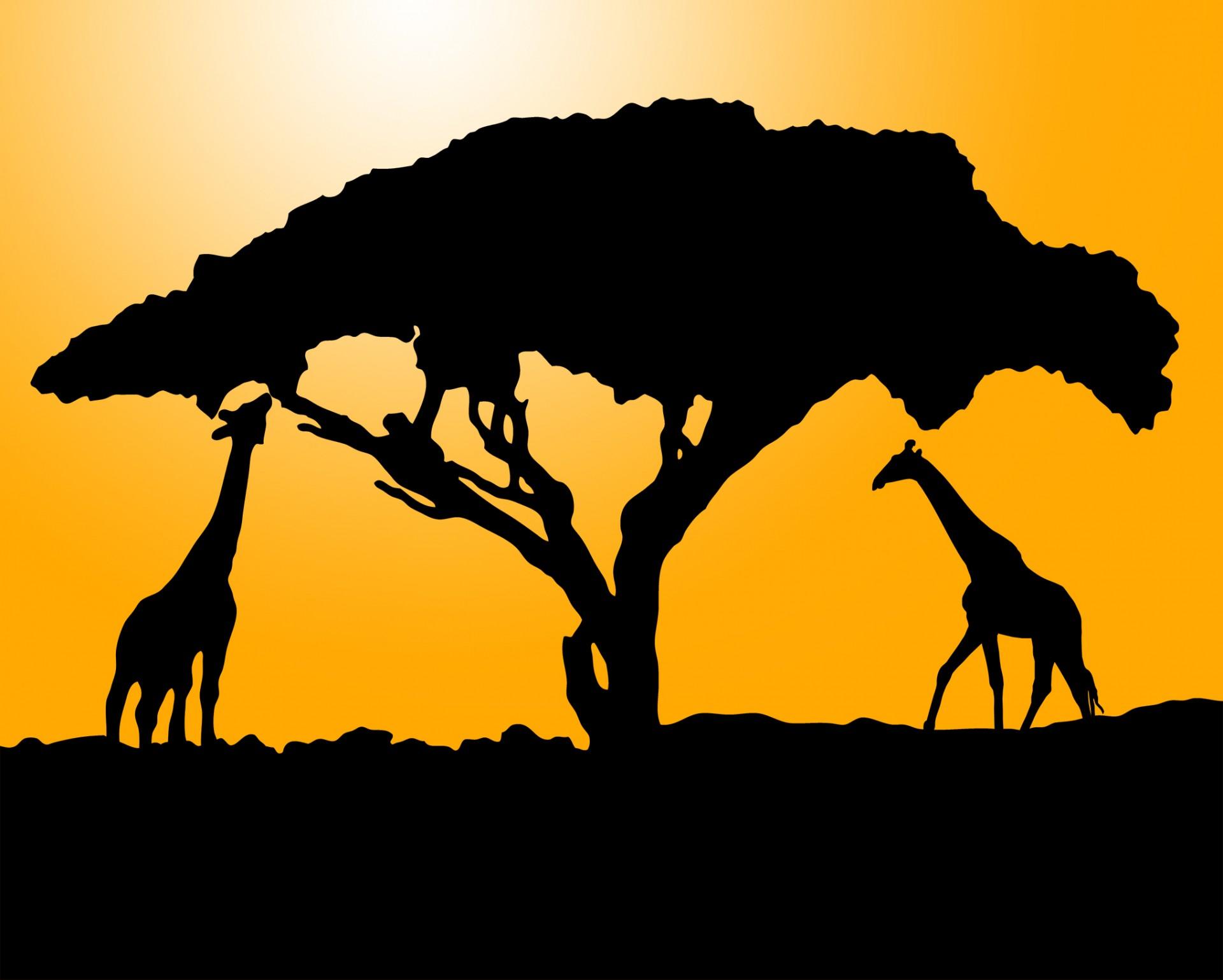 1920x1539 Giraffe Silhouette At Sunset Free Stock Photo