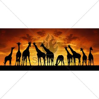 325x325 Giraffe Gl Stock Images