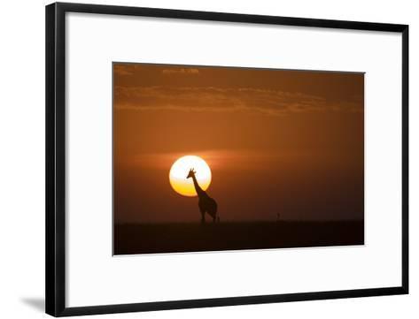 473x361 Silhouettes Of A Giraffe And An Ostrich Walking Across Grasslands